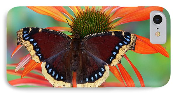 Mourning Cloak Butterfly, Nymphalis IPhone Case by Darrell Gulin