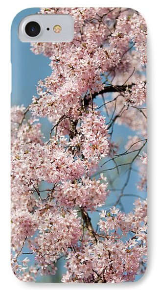 Prunus Subhirtella 'pendula' IPhone Case by Maria Mosolova