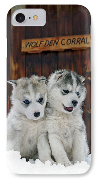 Siberian Husky Puppies IPhone Case by Rolf Kopfle