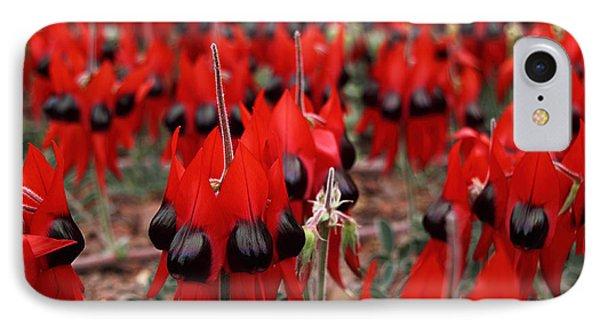 Sturt's Desert Pea Outback South Australia Phone Case by Carole-Anne Fooks