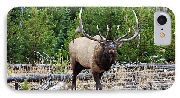 856p Bull Elk IPhone Case