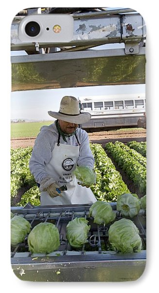 Lettuce Harvest IPhone Case by Jim West