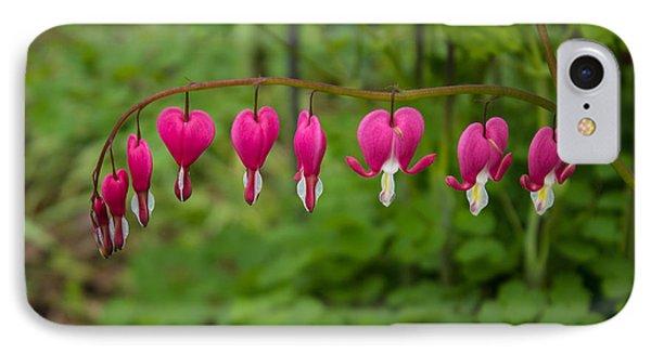 Bleeding Hearts IPhone Case by Martin Newman