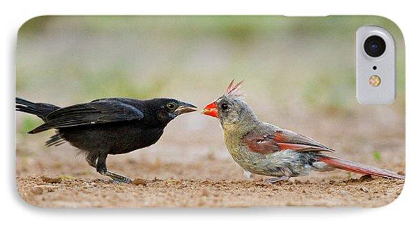 Northern Cardinal (cardinalis Cardinalis IPhone Case by Larry Ditto