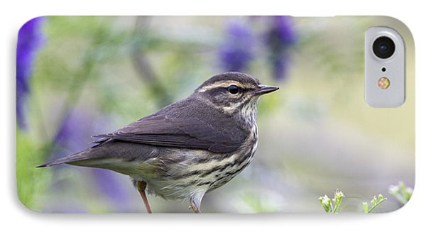 Northern Waterthrush IPhone Case by Doug Lloyd