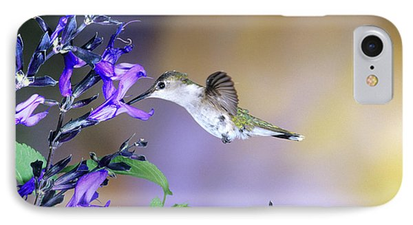 Ruby-throated Hummingbird (archilochus IPhone Case by Richard and Susan Day