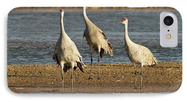 Sandhill Cranes (grus Canadensis IPhone Case