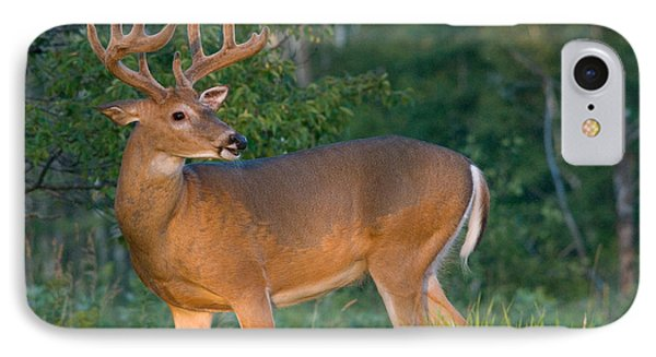 White-tailed Buck Phone Case by Linda Freshwaters Arndt