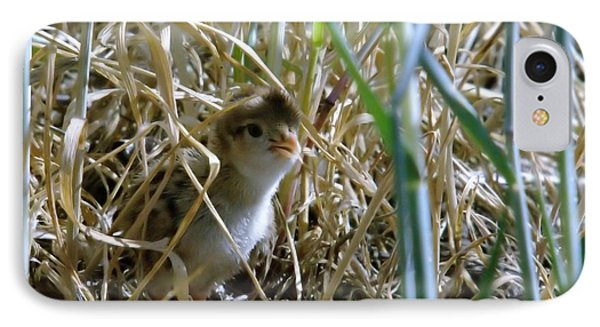 A Baby Quail Looks Back IPhone Case by Jeff Swan