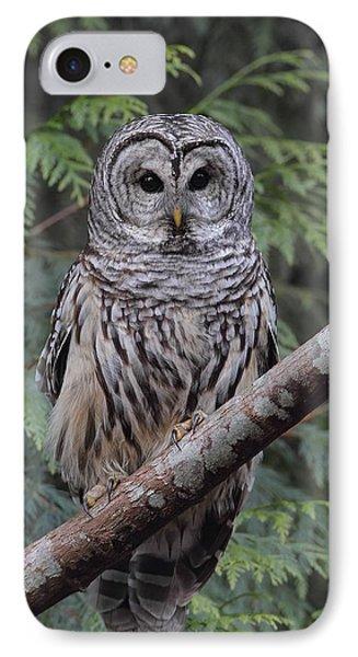 A Barred Owl IPhone Case by Daniel Behm