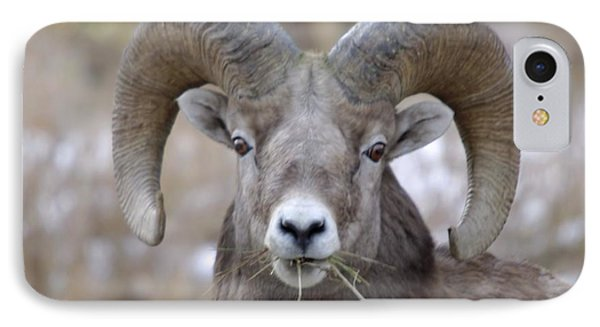 A Big Ram Caught With His Mouth Full Phone Case by Jeff Swan