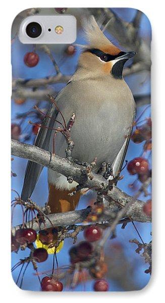 A Bird For Its Crest.. Phone Case by Nina Stavlund