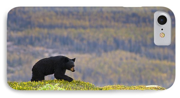 A Black Bear Foraging For Berries Near IPhone Case by Michael Jones