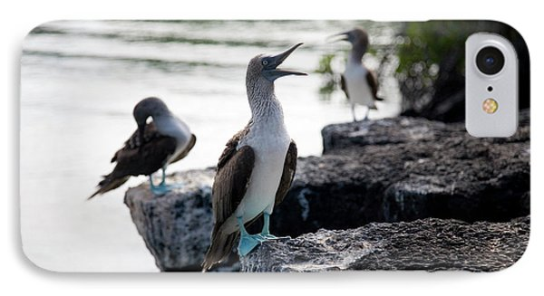 Boobies iPhone 7 Case - A Blue Footed Boobie Sula Nebouxii by Eric Rorer