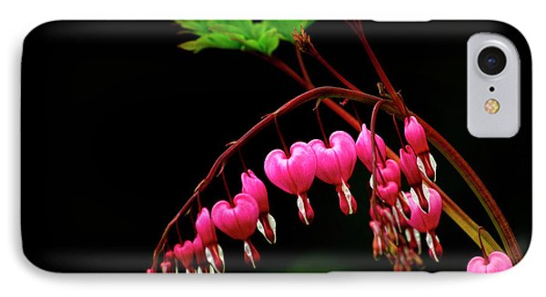 A Bright Bleeding Heart Flower IPhone Case by Sheila Haddad