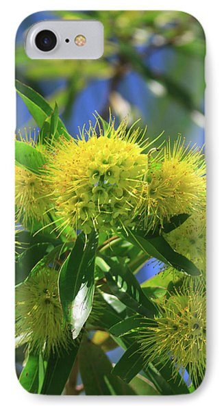 Far North Queensland iPhone 7 Case - A Bright Yellow Wattle Tree In Suburban by Paul Dymond