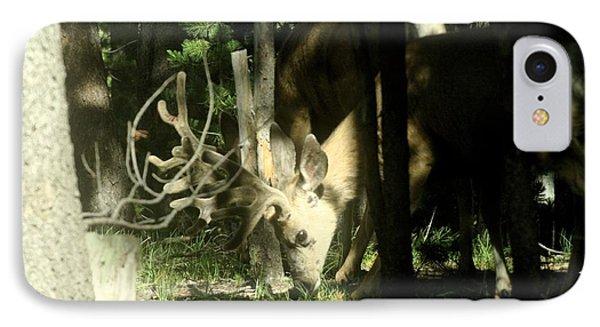 A Buck Deer Grazes IPhone Case