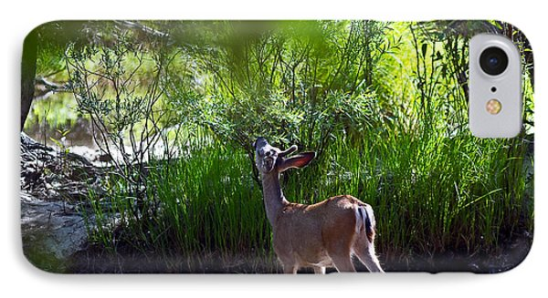 A Buck Feeding IPhone Case by Brian Williamson