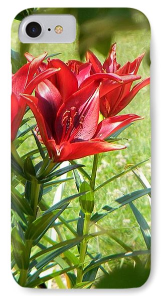 A Burst Of Red IPhone Case by Jean Goodwin Brooks