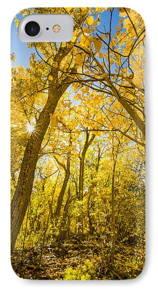 A Canopy Of Aspens At Mcgee Creek In The Eastern Sierras IPhone Case