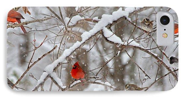 A Cardinal Snow IPhone Case