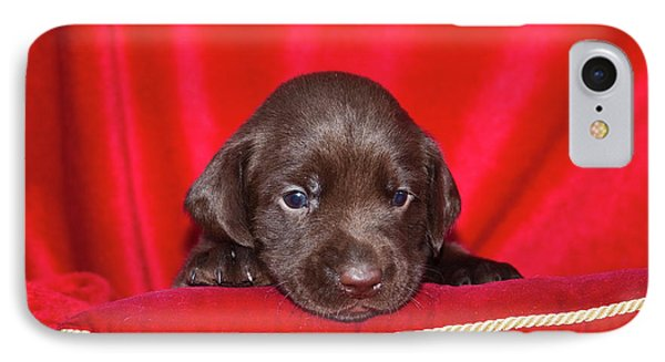 A Chocolate Labrador Retriever Puppy IPhone Case