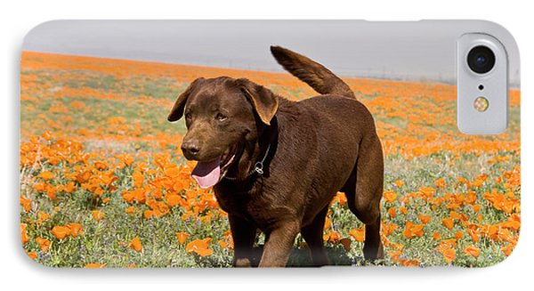 A Chocolate Labrador Retriever Walking IPhone Case
