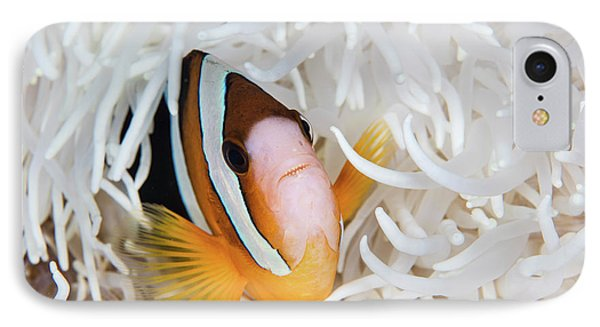 A Clarks Anemonefish Swims Among IPhone Case by Ethan Daniels