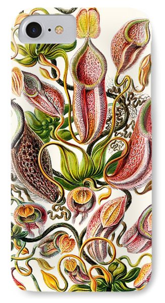 A Collection Of Nepenthaceae IPhone Case by Ernst Haeckel