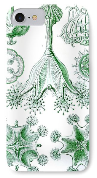 A Collection Of Stauromedusae Phone Case by Ernst Haeckel