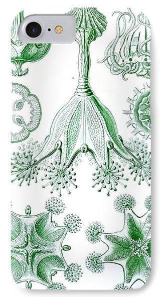 A Collection Of Stauromedusae IPhone Case by Ernst Haeckel