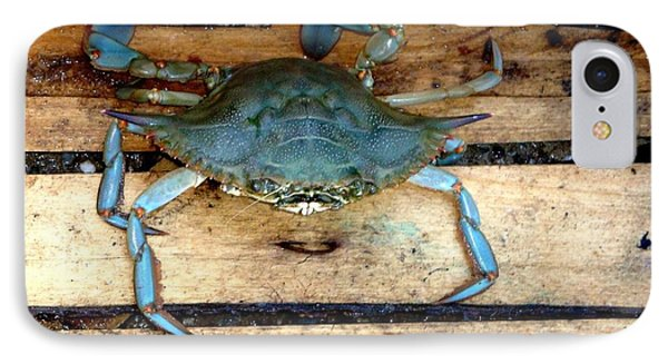A Crab In A Wooden Box Phone Case by Olga R
