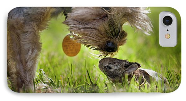 A Cute Yorkie Dog Sniffing A Little IPhone Case