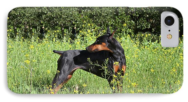 A Doberman Pinscher Looking IPhone Case by Zandria Muench Beraldo