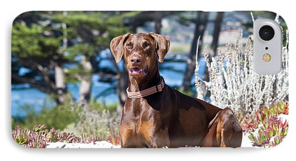 A Doberman Pinscher Lying In The White IPhone Case by Zandria Muench Beraldo