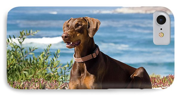 A Doberman Pinscher Lying On The White IPhone Case