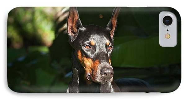 A Doberman Pinscher Standing In A Sunny IPhone Case by Zandria Muench Beraldo