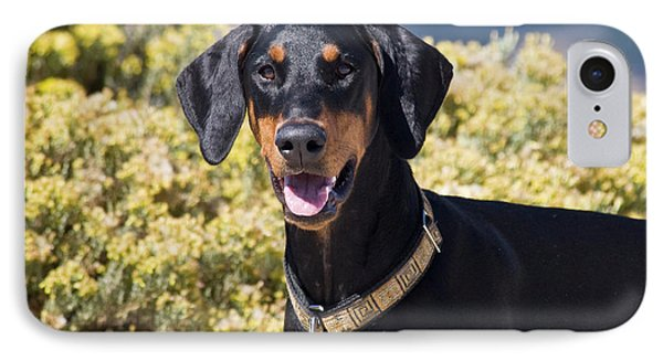 A Doberman Pinscher Standing In Front IPhone Case by Zandria Muench Beraldo