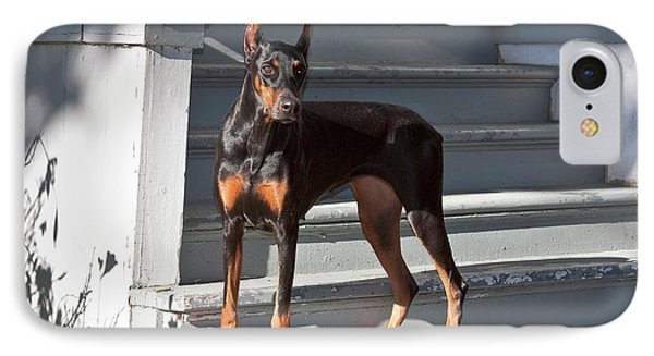 A Doberman Pinscher Standing On Stairs IPhone Case by Zandria Muench Beraldo