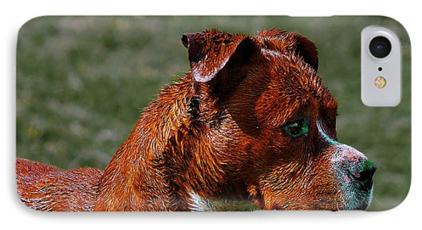 IPhone Case featuring the photograph A Dog by John  Kolenberg