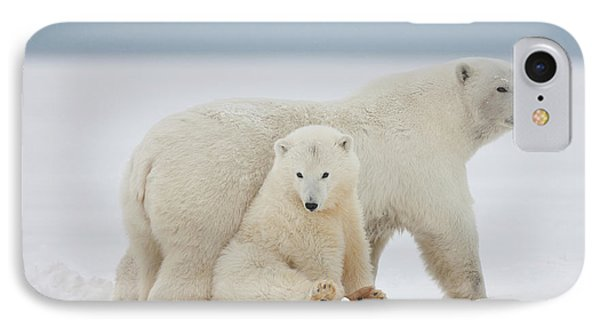 A Female Polar Bear And Her Two Cubs IPhone Case by Hugh Rose