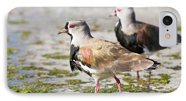 A Flock Of Southern Lapwings IPhone 7 Case by Ashley Cooper