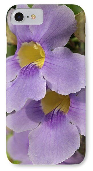 A Flower Blooms In Pedasi On Panama's IPhone Case by William Sutton