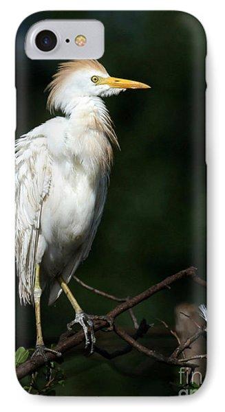 A Fluffed Cattle Egret IPhone Case by Sabrina L Ryan