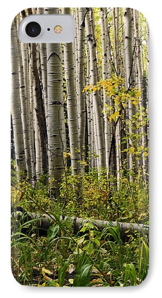 A Forest Of Aspen IPhone Case by Eric Rundle
