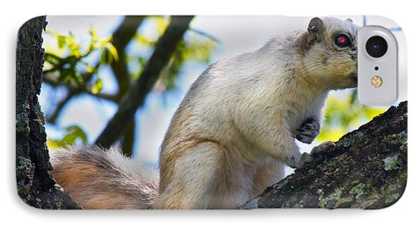 A Fox Squirrel Pauses Phone Case by Betsy Knapp