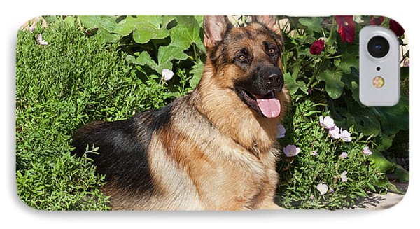 A German Shepherd Lying On A Garden IPhone Case by Zandria Muench Beraldo