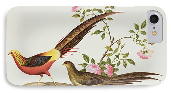 A Golden Pheasant IPhone Case by Chinese School