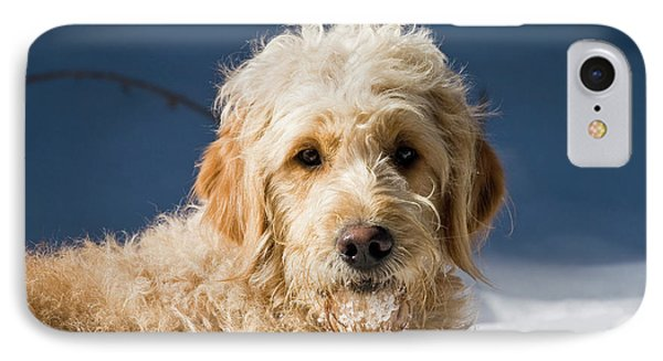 A Goldendoodle Lying In The Snow Bathed IPhone Case