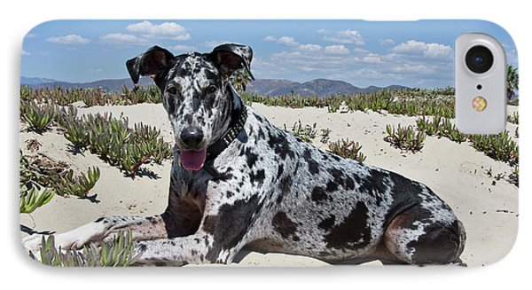 A Great Dane Lying In The Sand IPhone Case